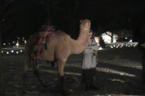 Video: Middlebush Reformed Church Living Nativity
