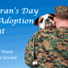 Pet Adoption Fees Refunded In November For Veterans, Active Military And Families