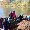 Junior Girl Scouts Plant Daffodils In Colonial Park