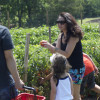 Snyder's Farm Expands 'Pick Your Own' Offerings