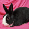 Abby Wants To Hop Into Your Life