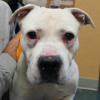 Mack Looking For A Home All His Own