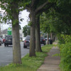 Shade Tree Commission Reviewing Plan To Replace Hamilton Street Trees