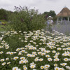 Flower & Garden Photo Workshop Set For Colonial Park