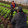 Rutgers Cooperative Extension Offers A High Tunnel Winter Lettuce Workshop