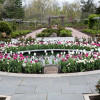 Narrative Tours Of The Colonial Park Rose Garden Offered