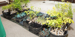 Park Commission Reschedules Arbor Day Native Tree Giveaway