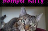 Hamper Kitty Ready for Her Forever Home