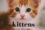 Kittens Ready for Their Forever Homes