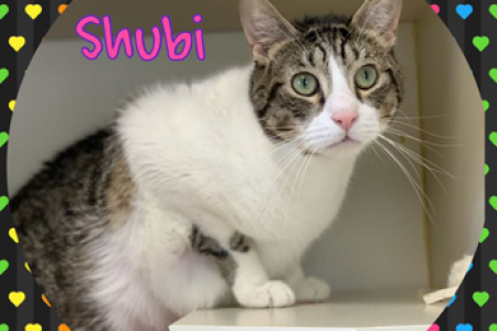 Shubi Ready for His Forever Home