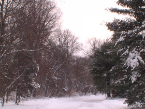 1-3-14 snowstorm3