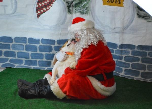 Santa Paws 201411